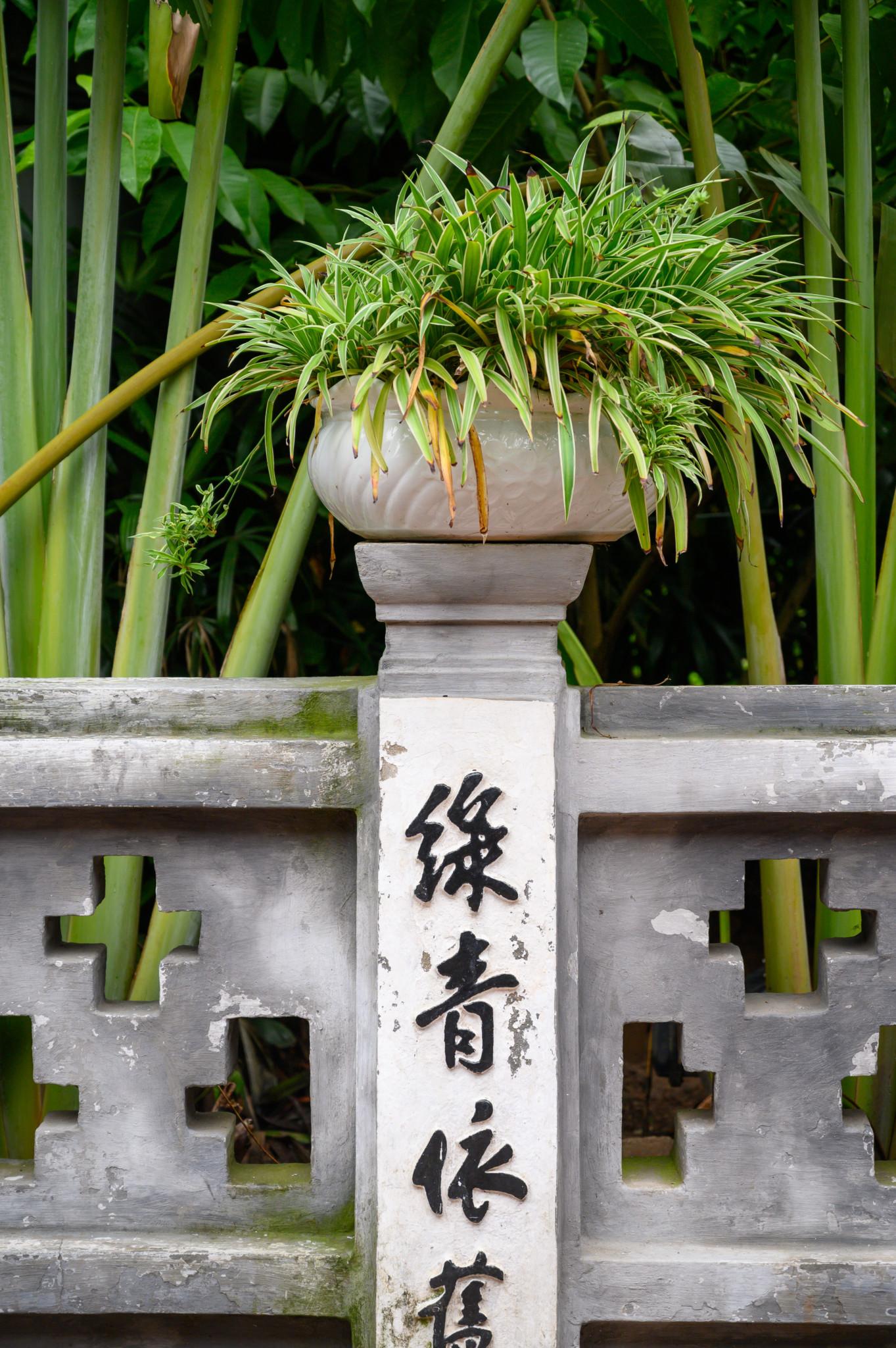 Eine Pflanze im Jade-Tempel in der Hauptstadt von Vietnam