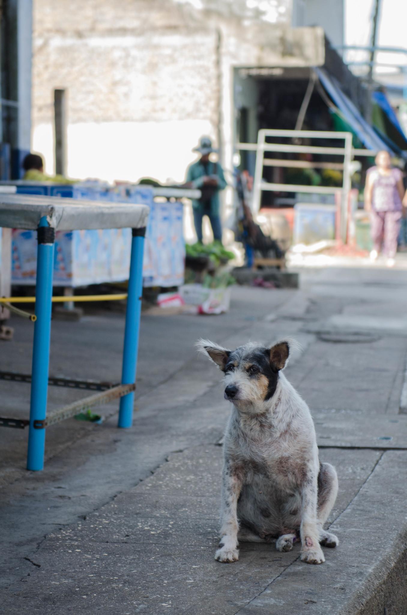 Hund am Pak Nam Market in Chumphon Thailand