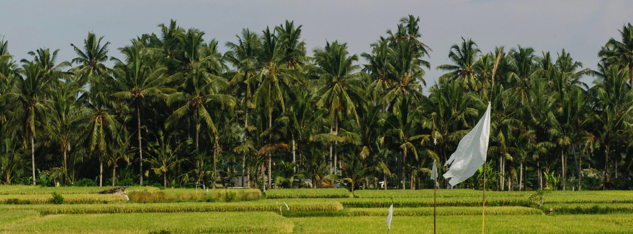 Indonesien Urlaub