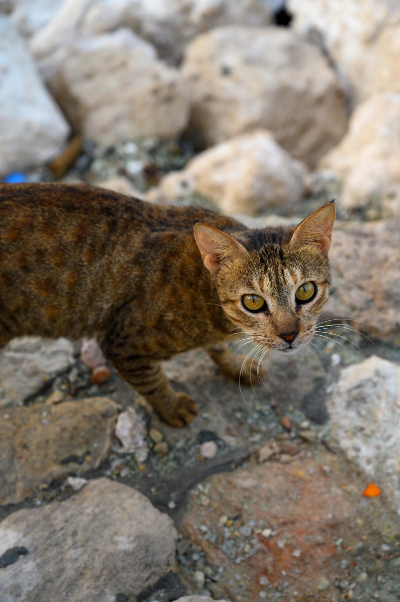 Katzen gibt es auch in Dammam in Saudi-Arabien