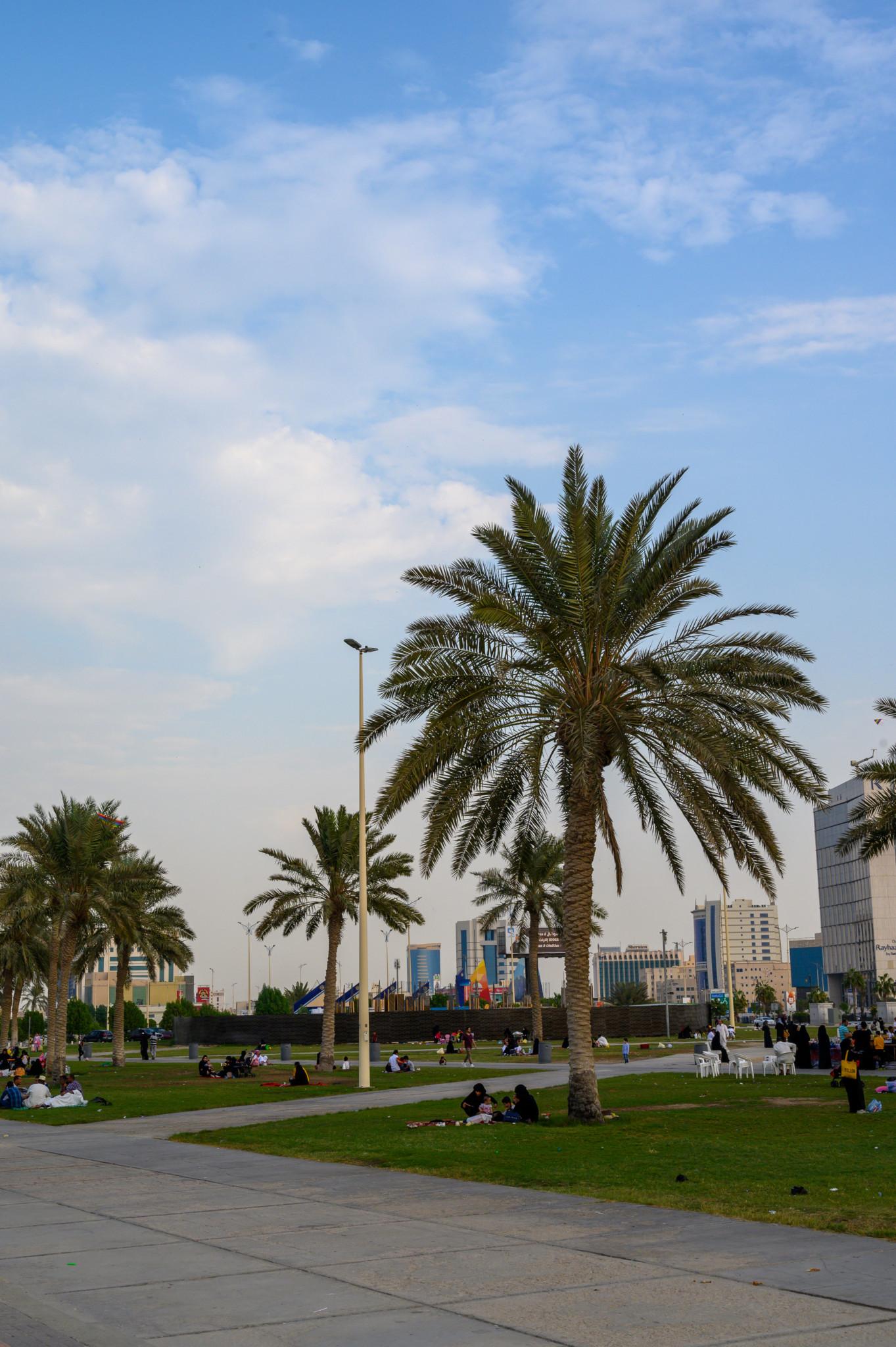 Palmen gibt es an der Dammam Corniche überall