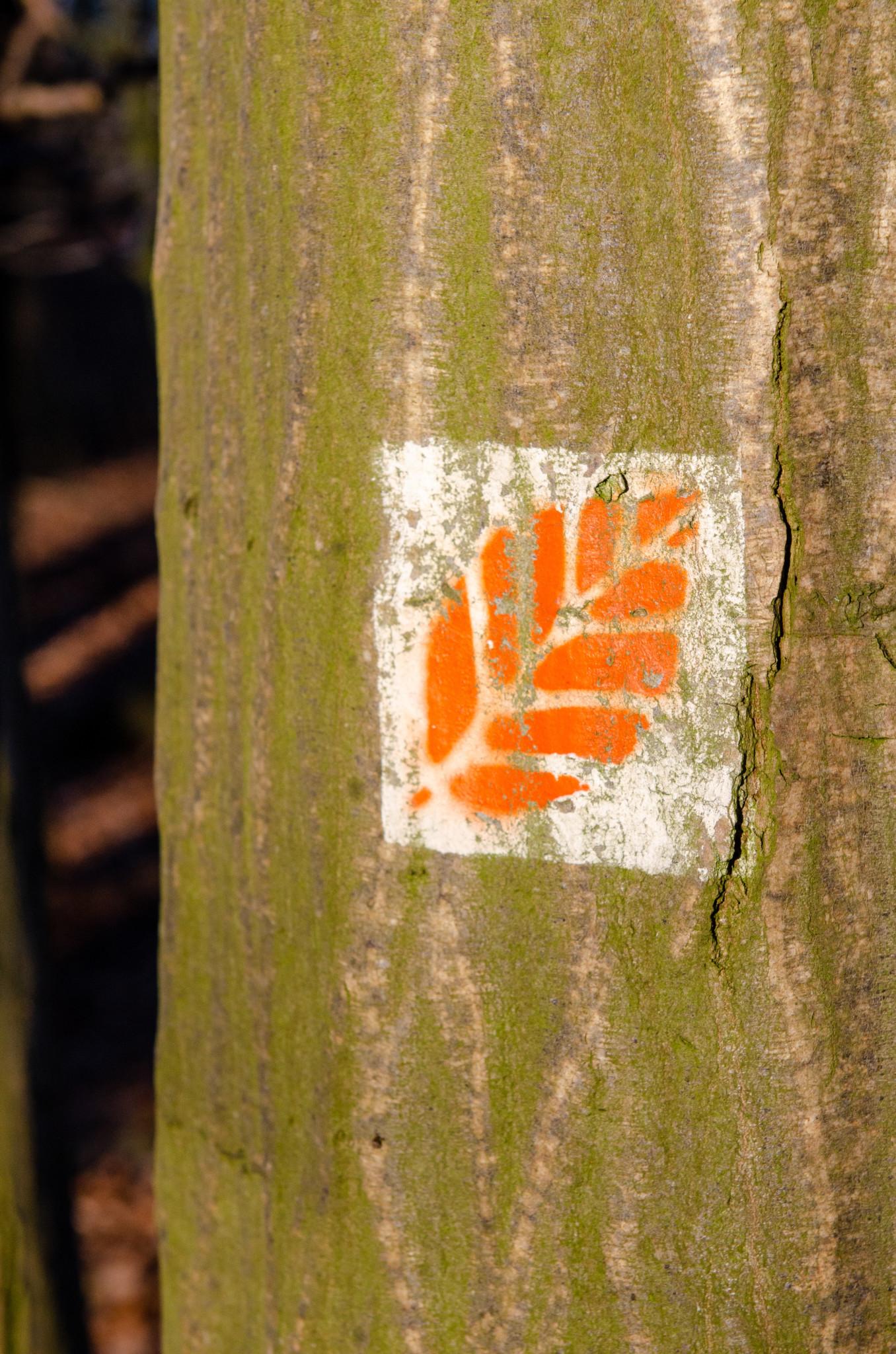 Wandermarkierung im Grumsiner Buchenwald
