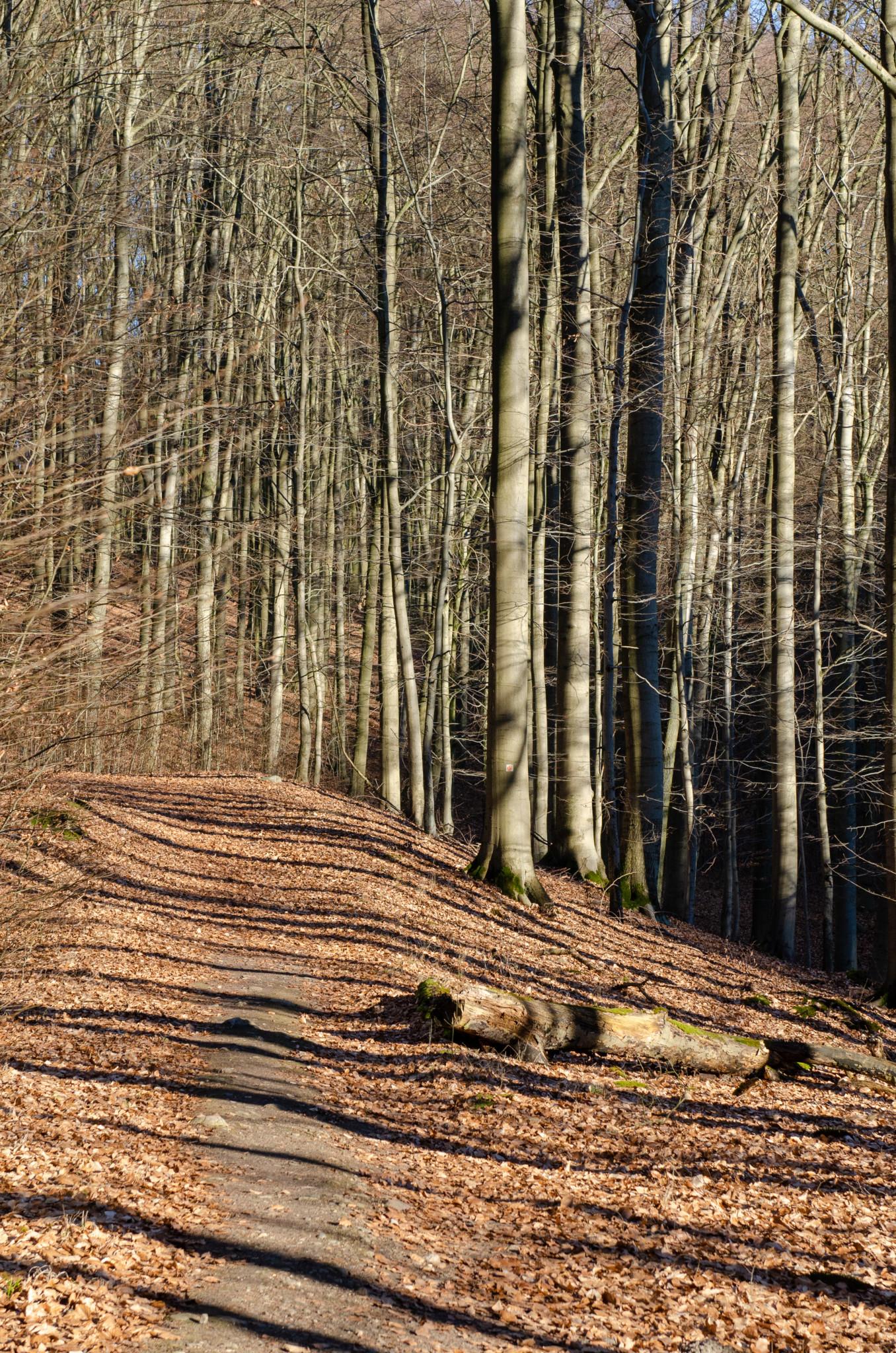 Der Grumsiner Buchenwald ist perfekt für eine Wanderung