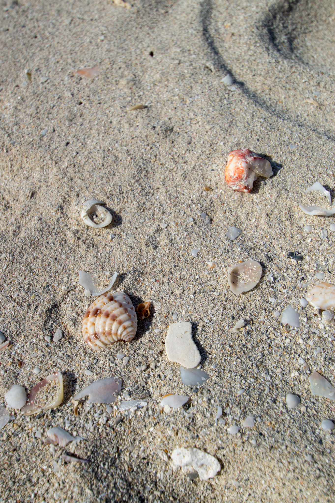 Muscheln am Strand von Varadero