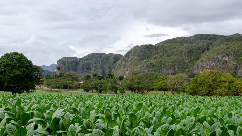 In den Tabakplantagen von Vinales