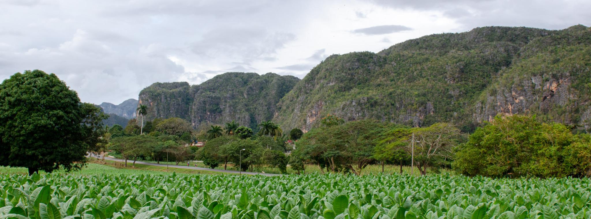 Valle de Vinales erkunden