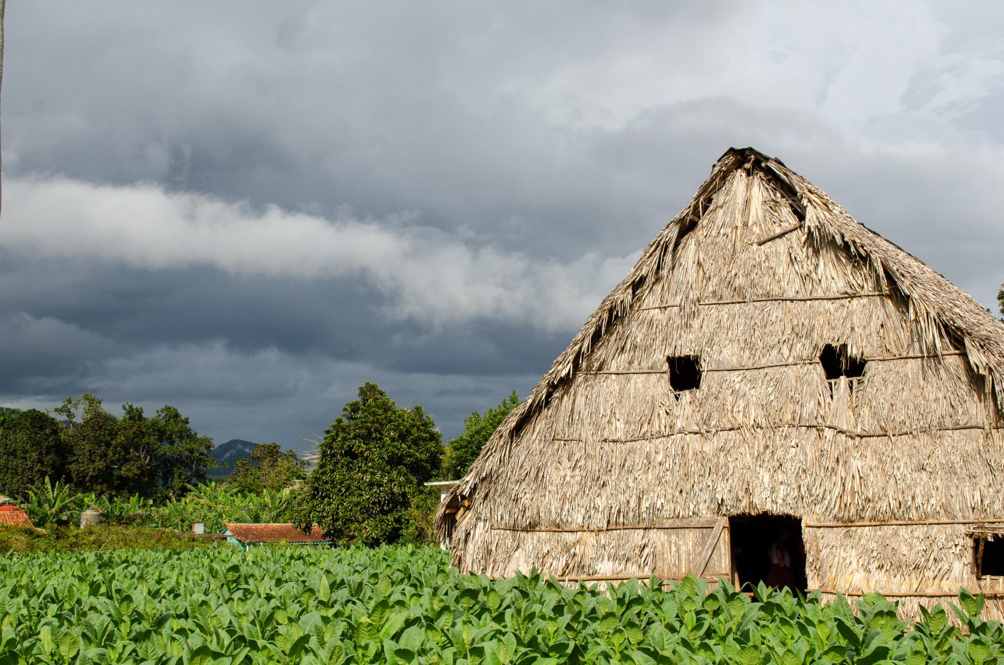 Haus in einem Tabakfeld in Vinales