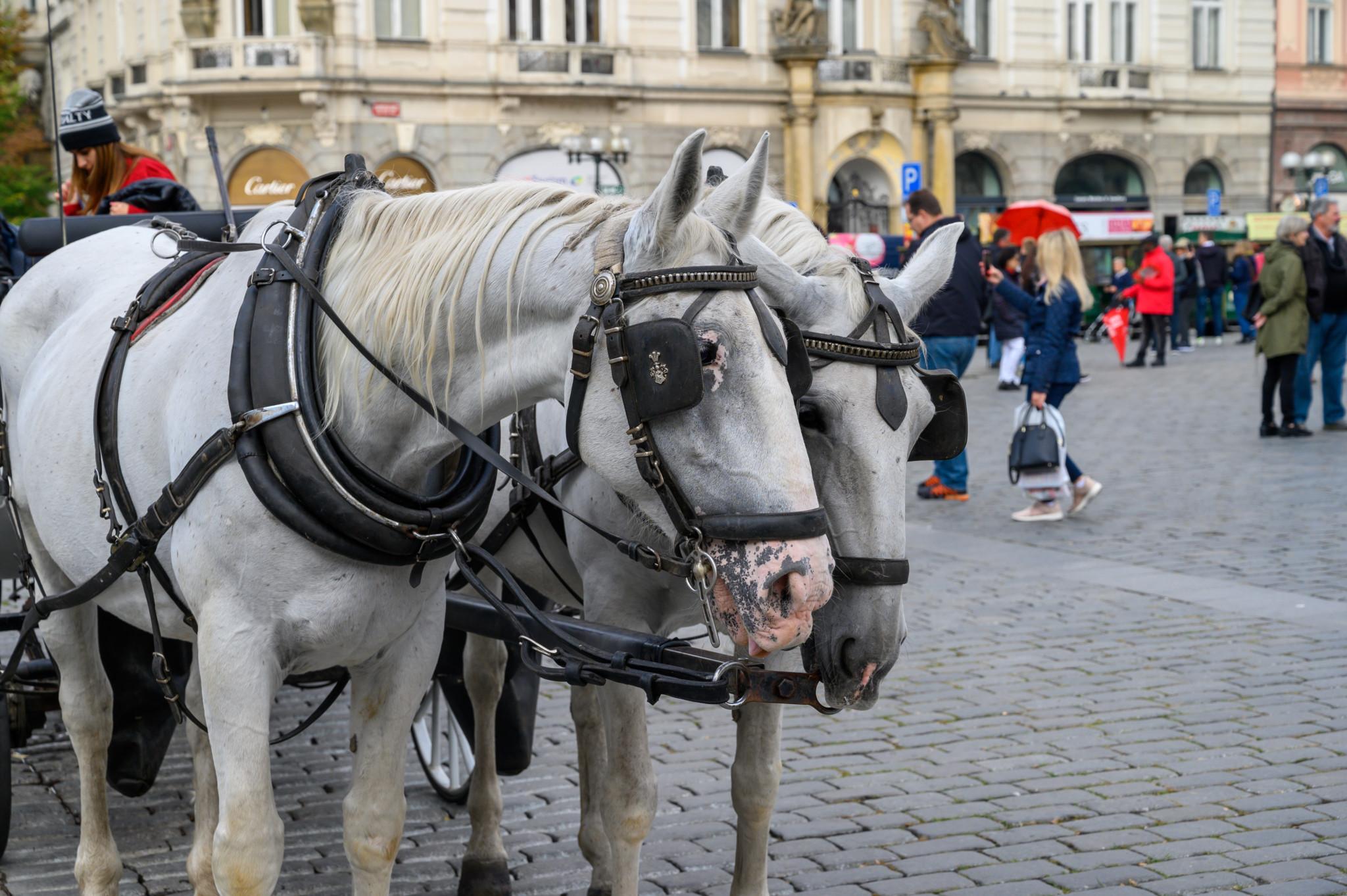 Mit der Kutsche durch die Altstadt von Prag