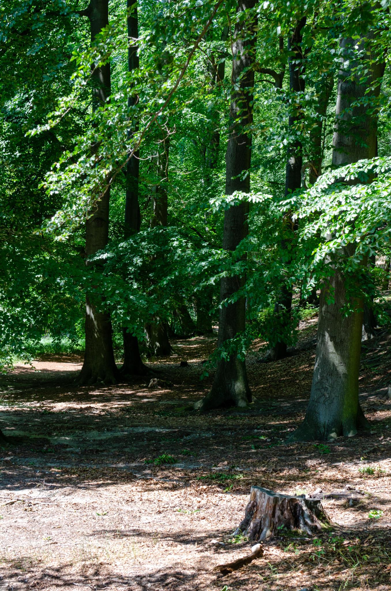 Wald um die Seen in Brandenburg