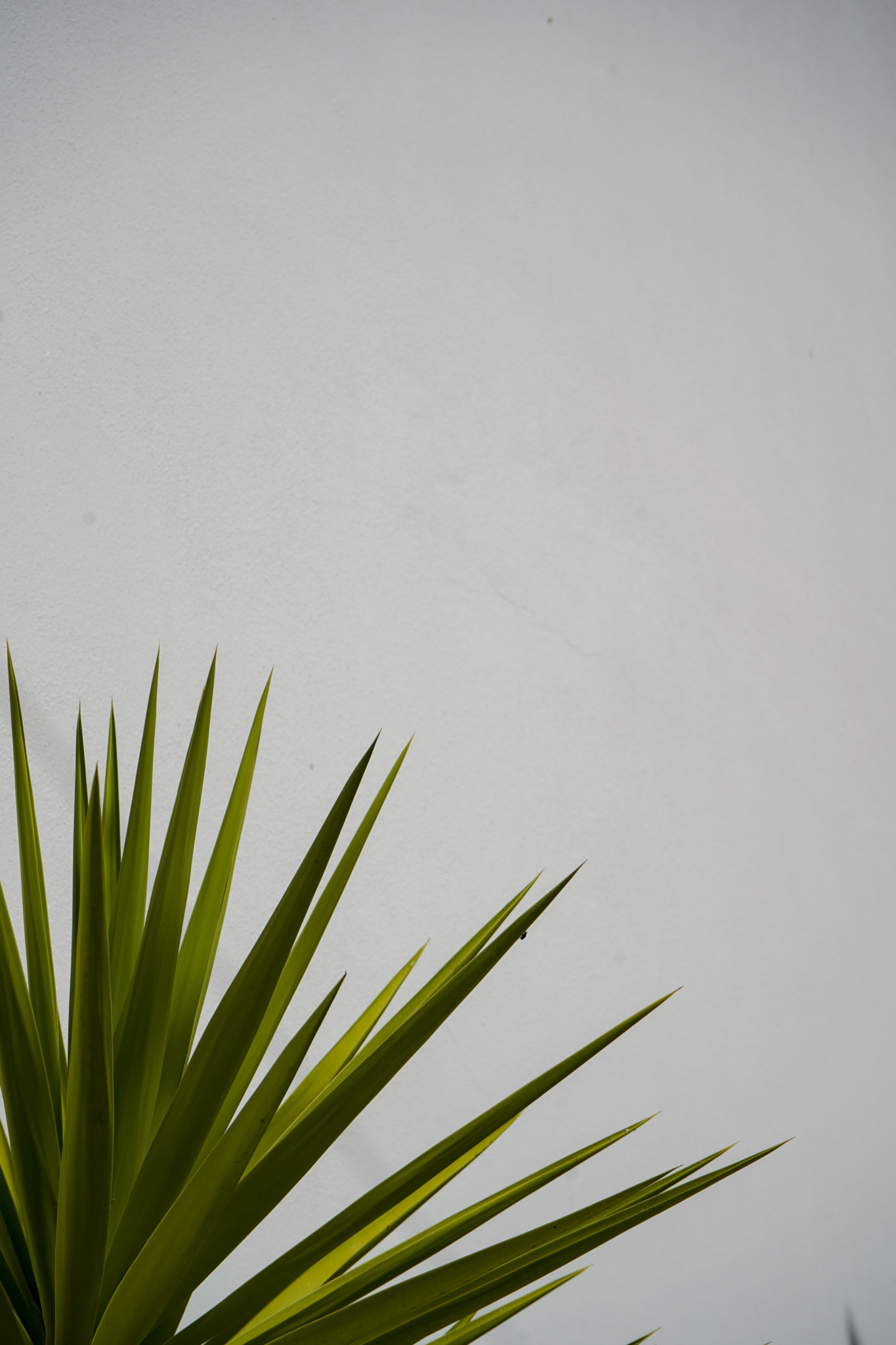Pflanzen an der Algarve