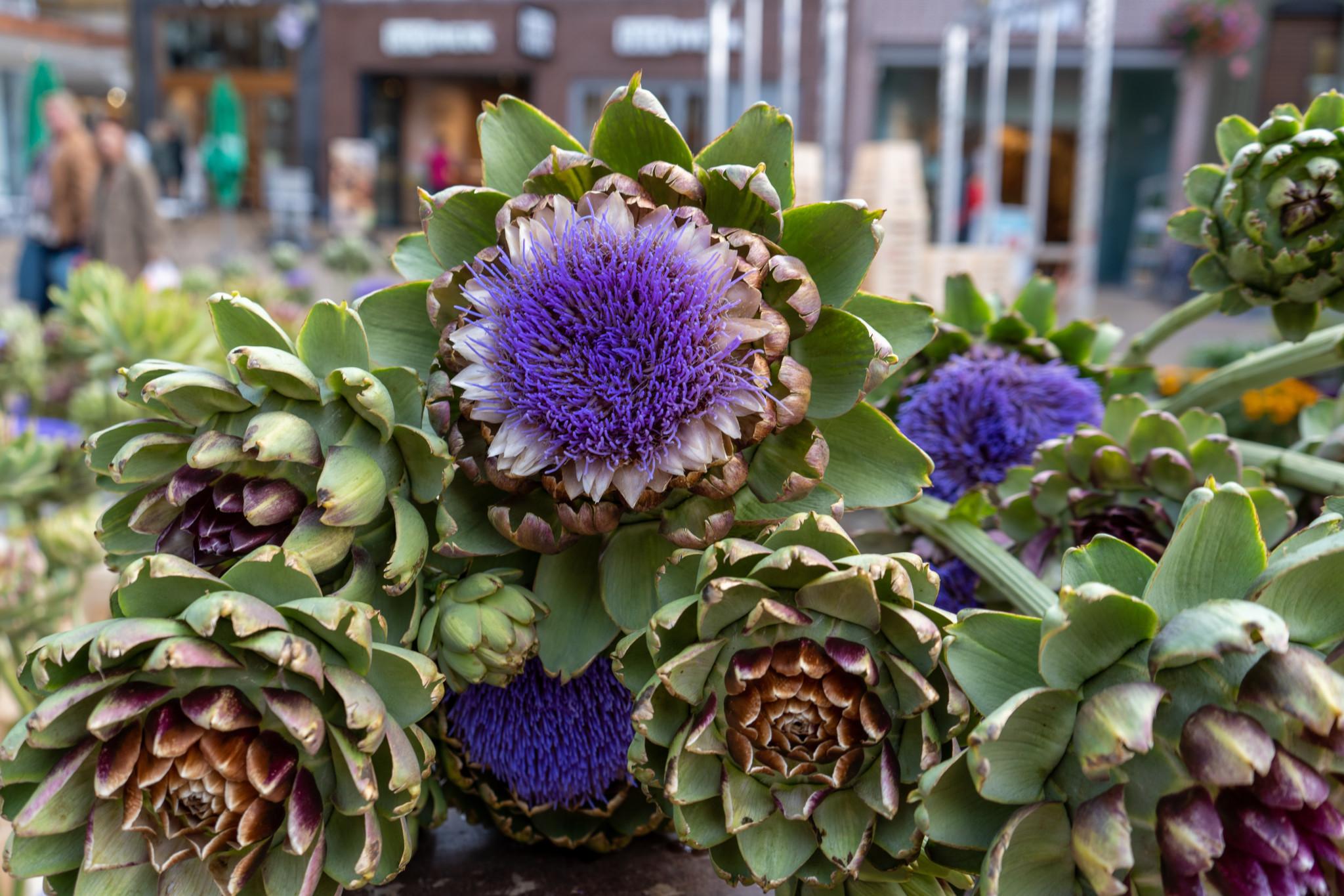 Artischockenblumen auf dem Markt