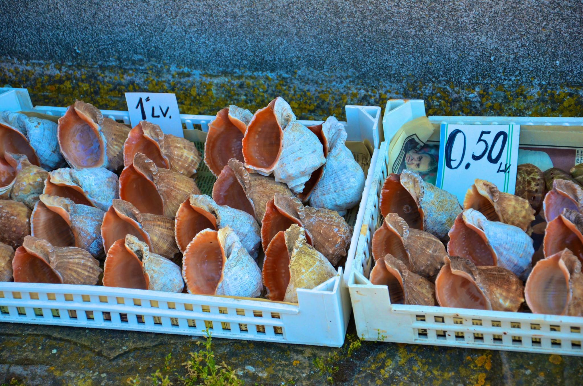 Muscheln in Nessebar