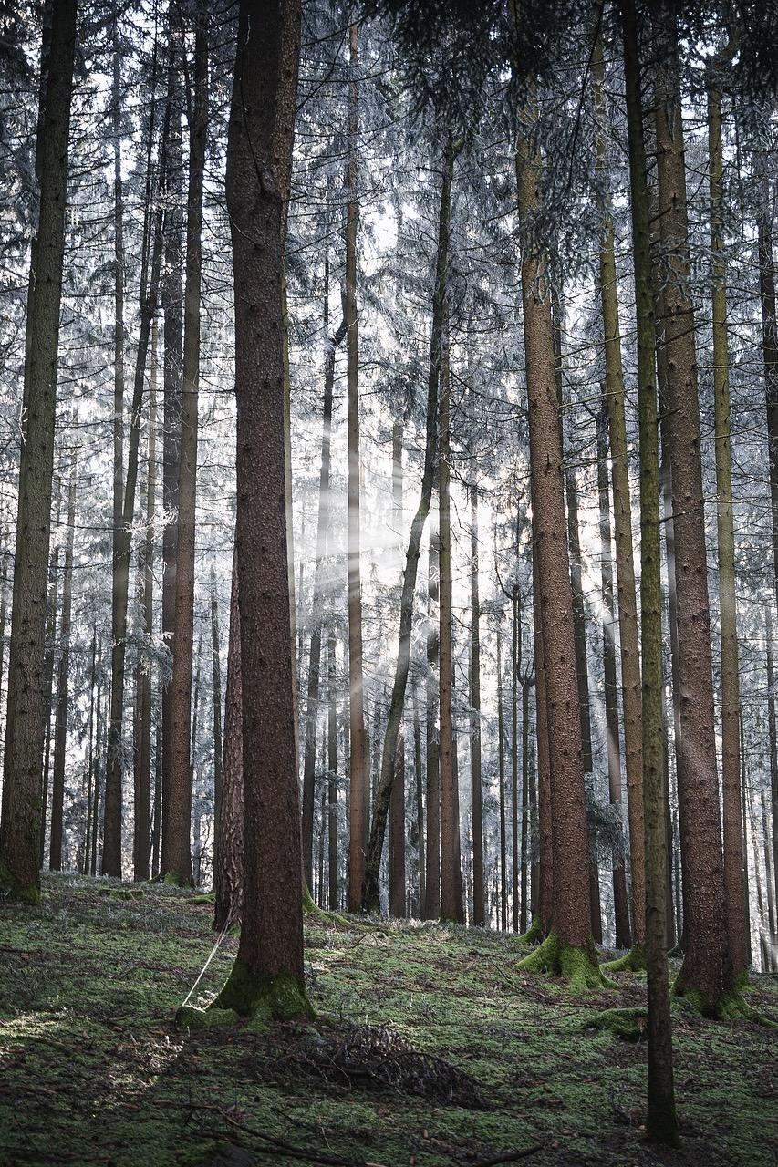 Der Bayerische Wald gehört zu den Tipps als Ausflugsziel in Bayern