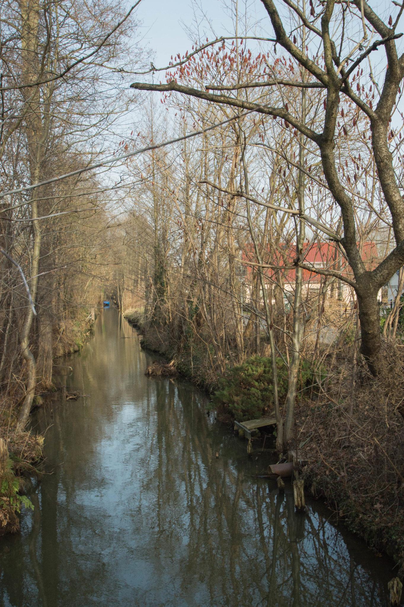 Typische Landschaft im Spreewald