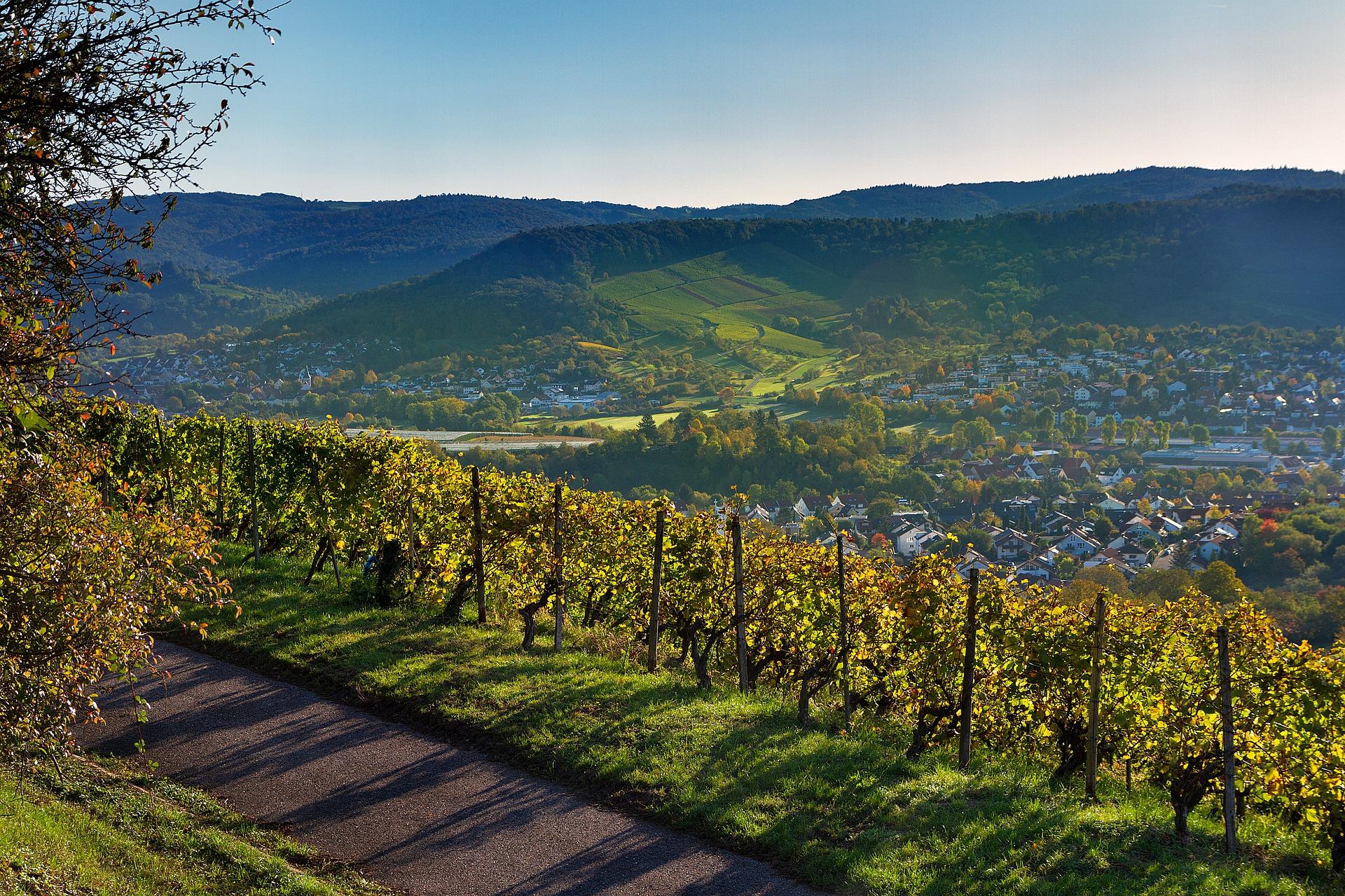 Weinberge in Baden-Württemberg