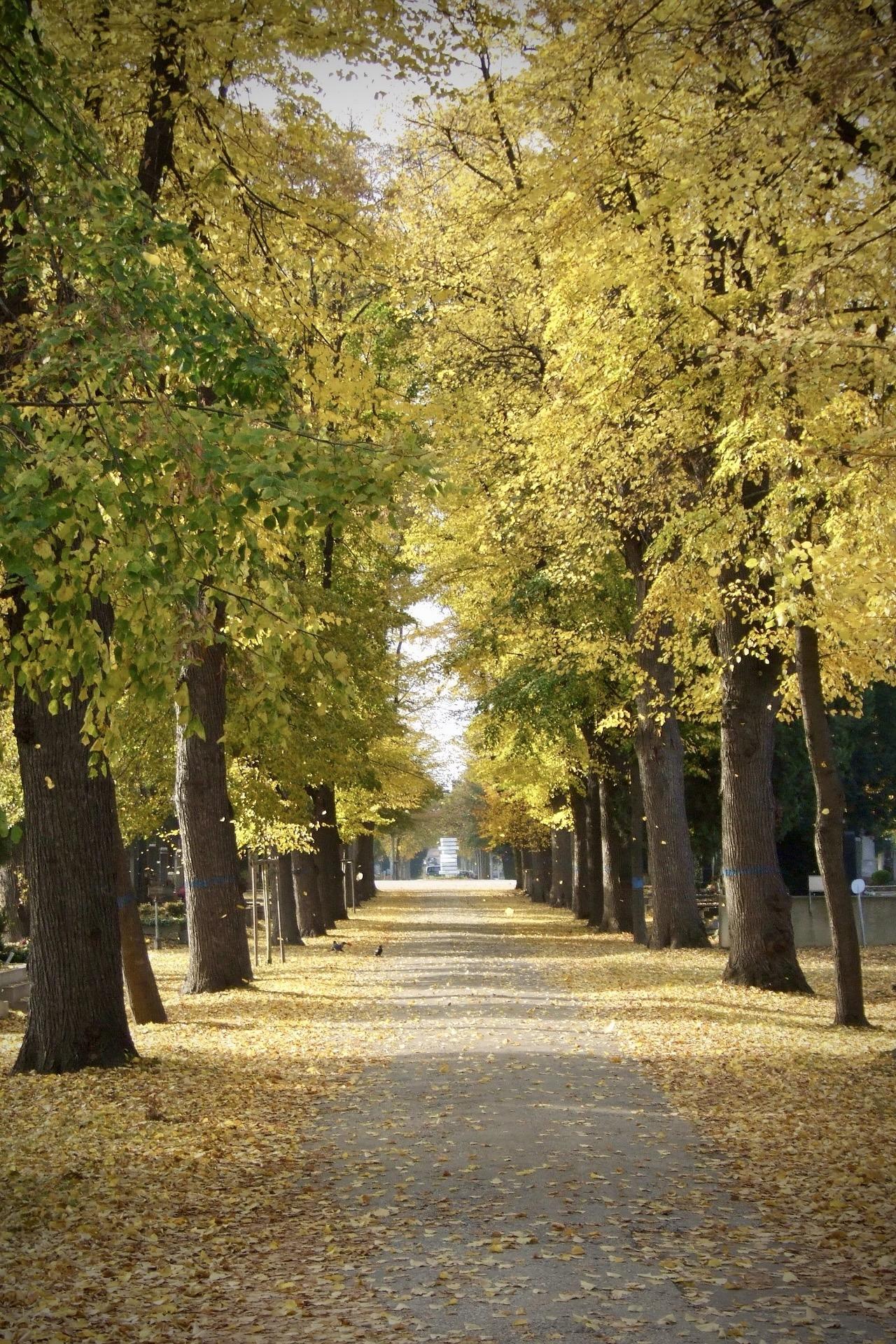 Der Zentralfriedhof in Wien im Herbst