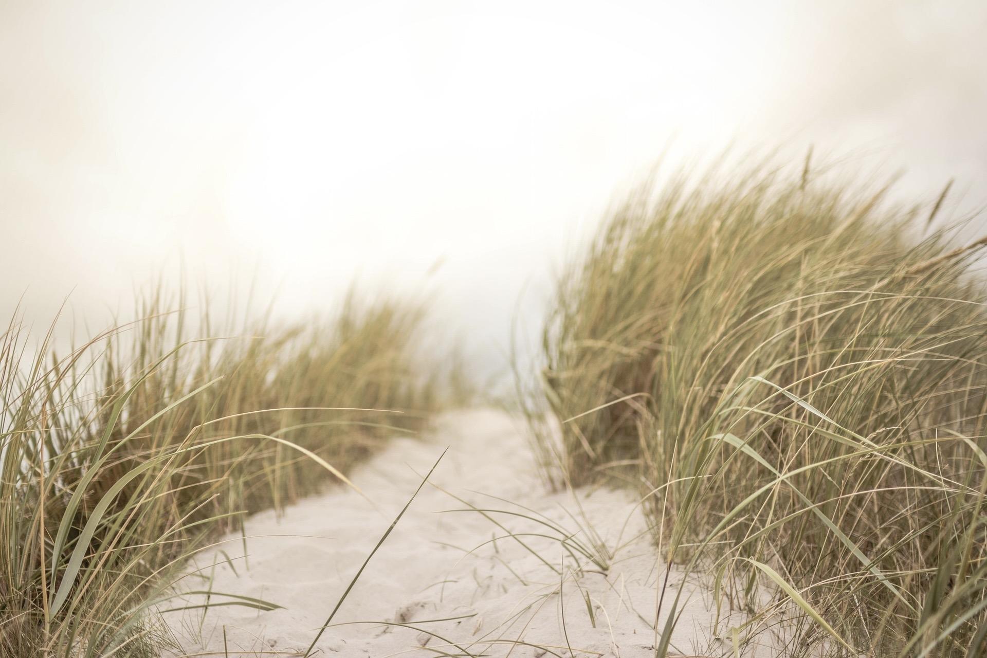 Die Boberger Dünen gehören zur schönsten Natur rund um Hamburg