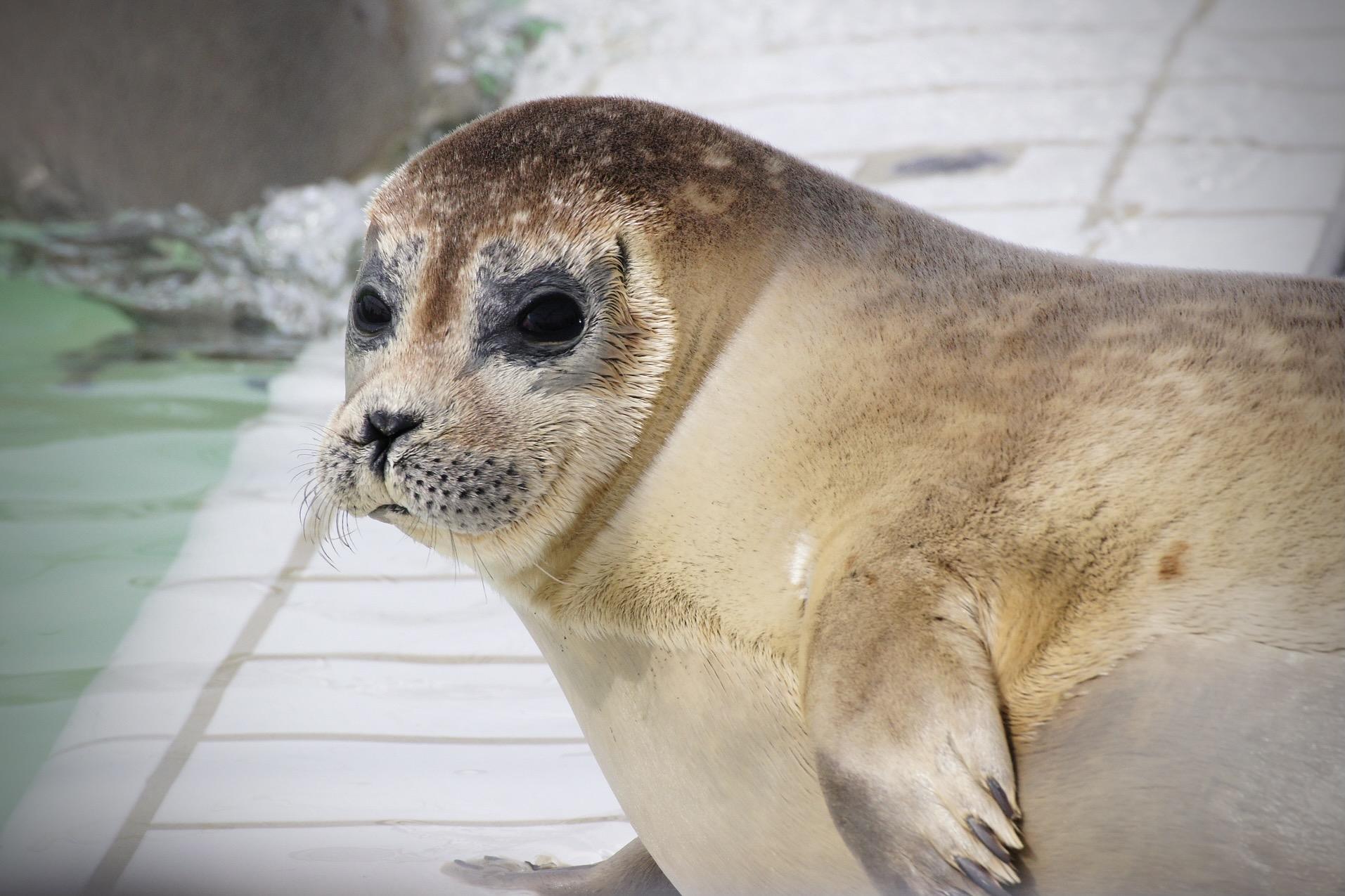 Die Seehundstation in Friedrichskoog lohnt sich als Ausflug von Hamburg