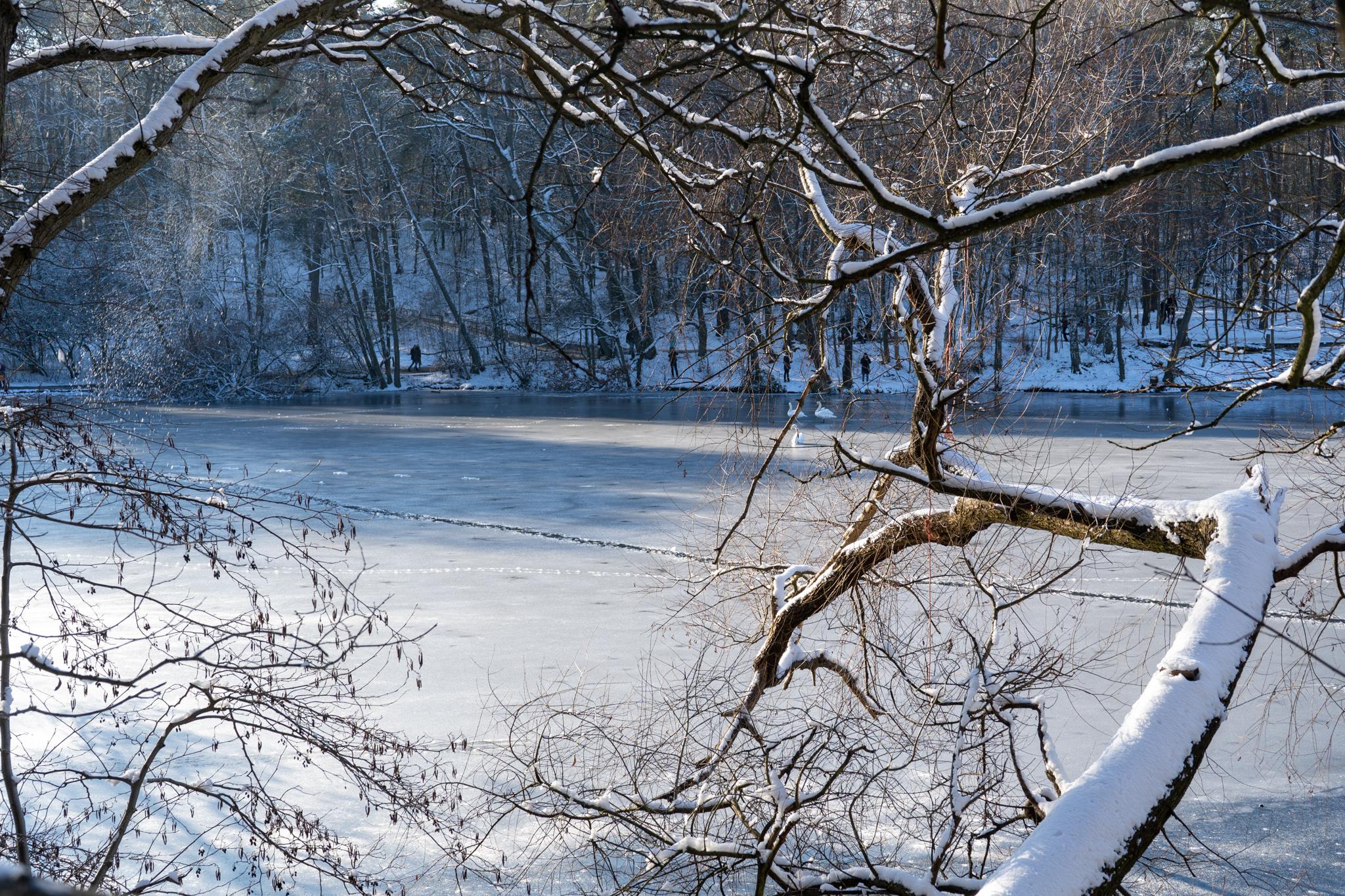 Die Krumme Lanke ist perfekt für Berlin im Winter