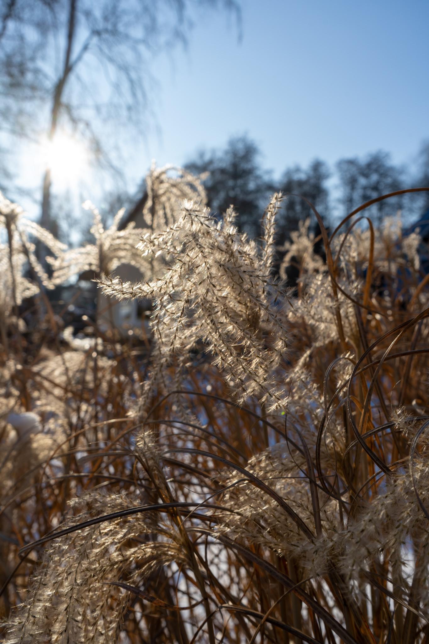 Pflanzen im Spreewald