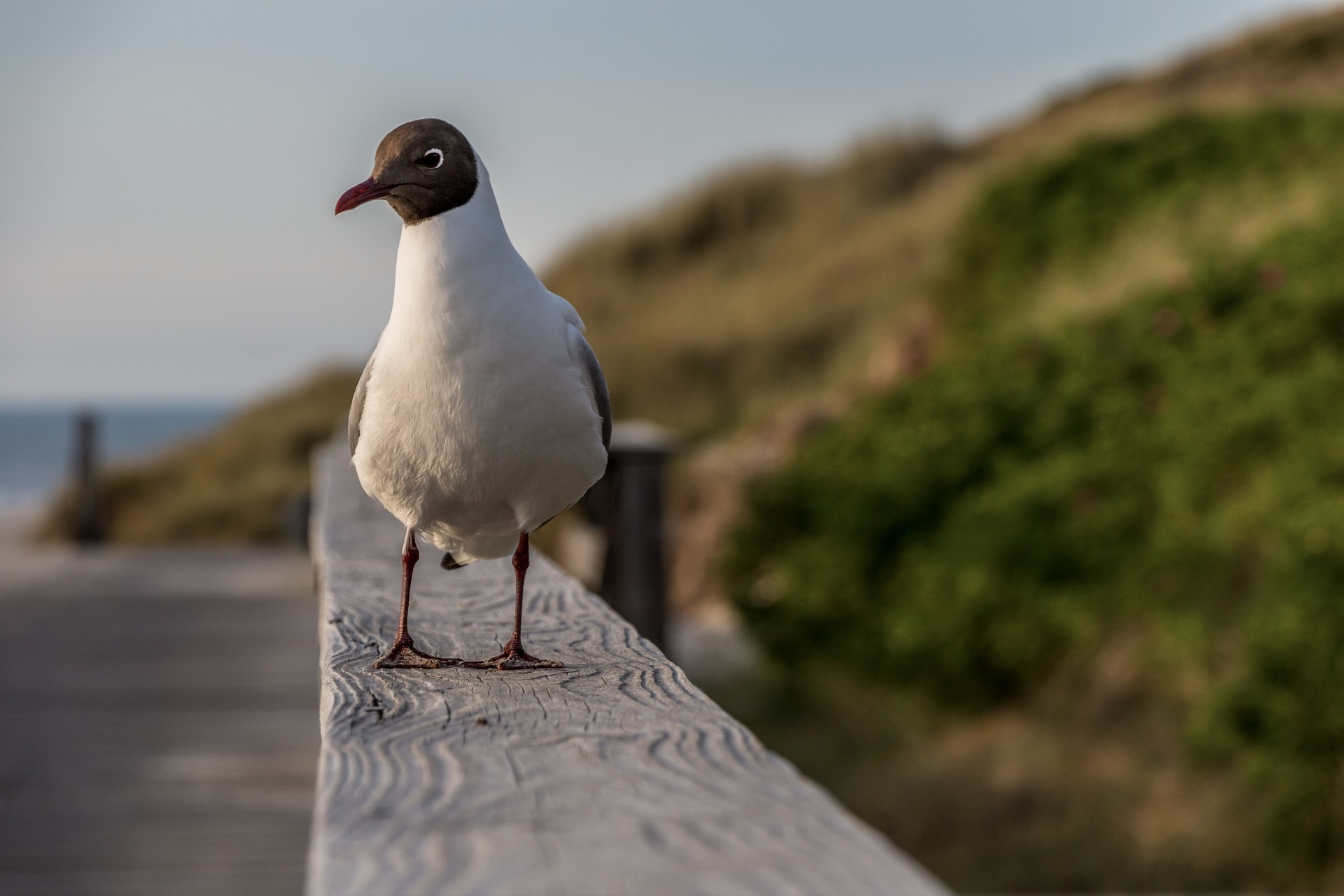 Das Rantumbecken auf der Insel Sylt ist ein Vogelparadies