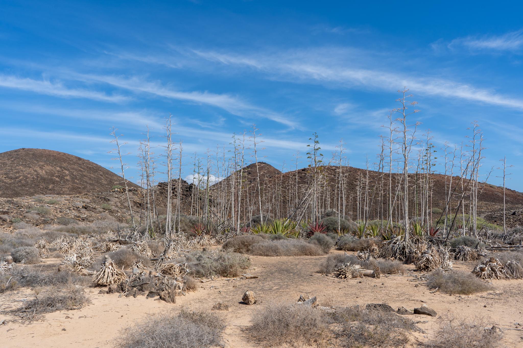 Sisalagaven auf Lobos