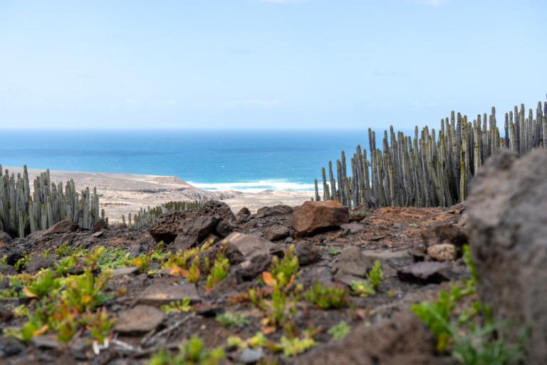 Die 14 schönsten Strände auf Fuerteventura
