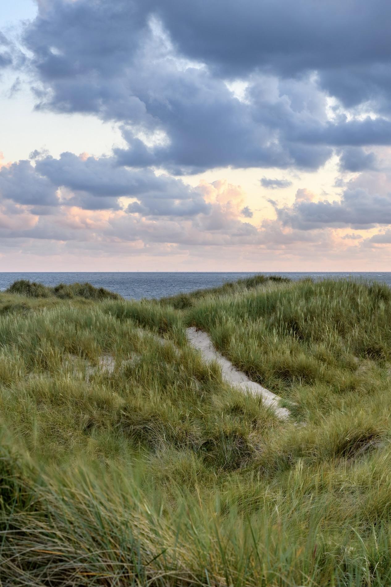 Eine Düne an der Nordsee auf Sylt