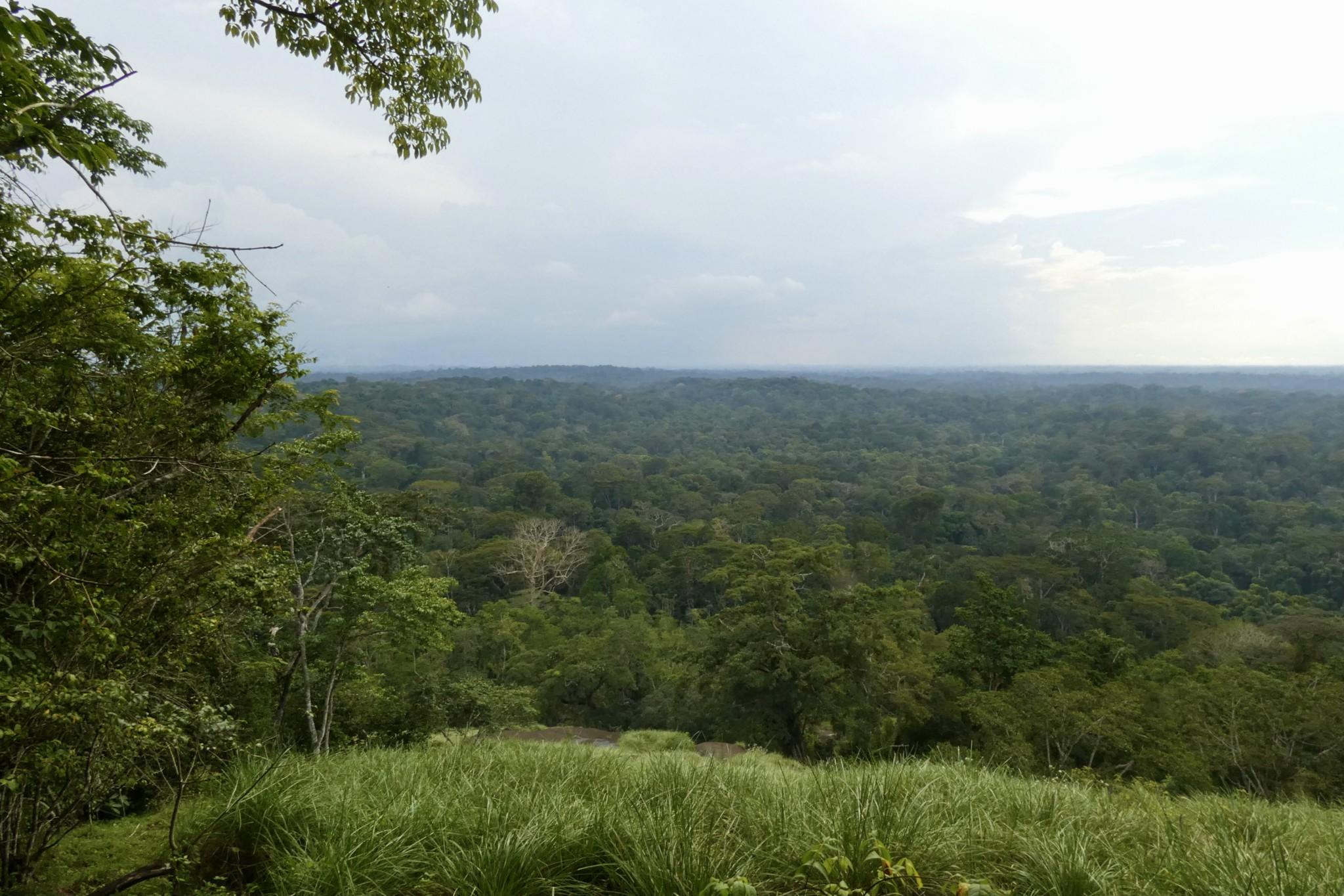 Reisetipps Elfenbeinküste: Tai Regenwald