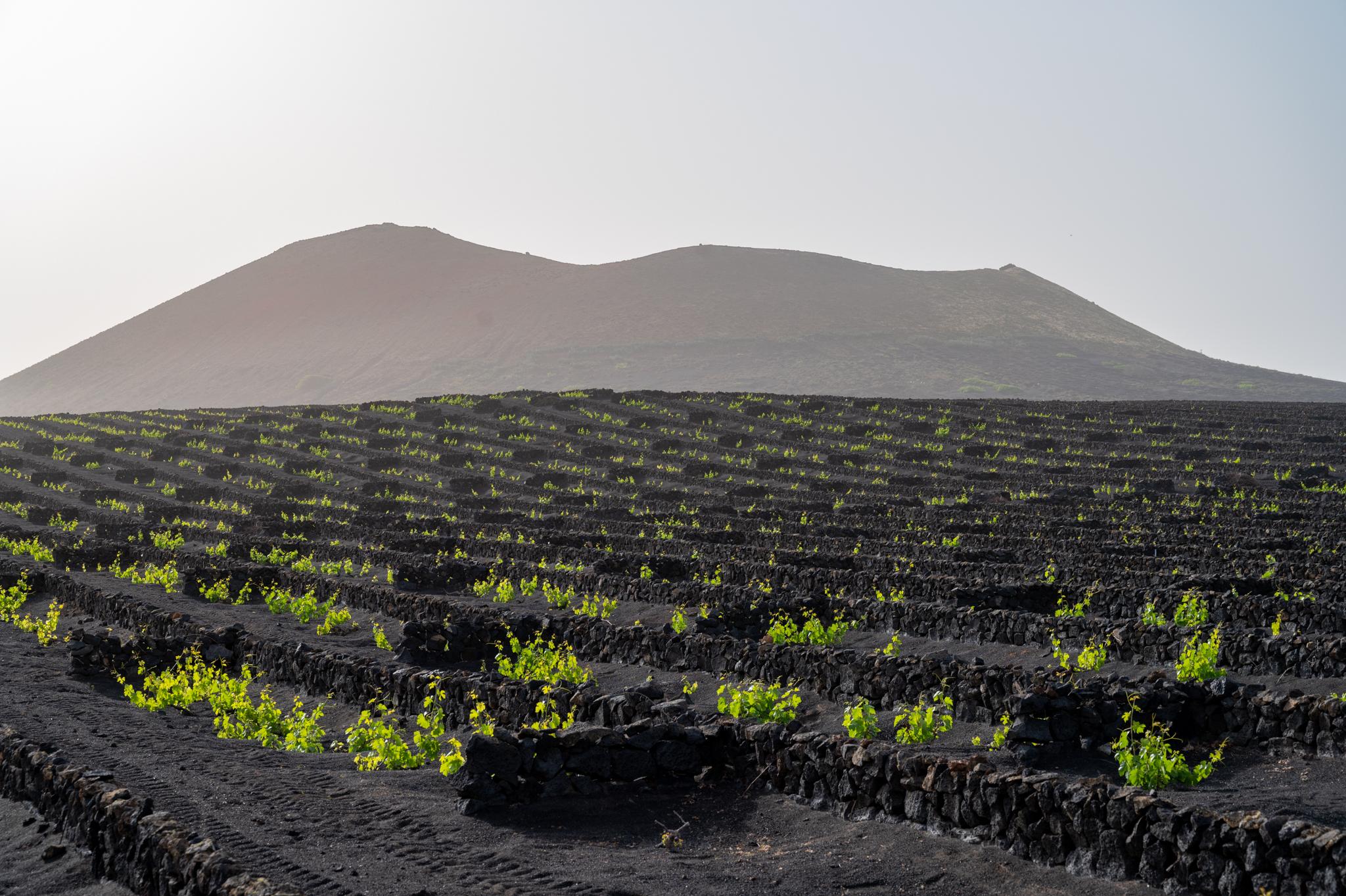 Ausblick auf die Weinstraße von Lanzarote
