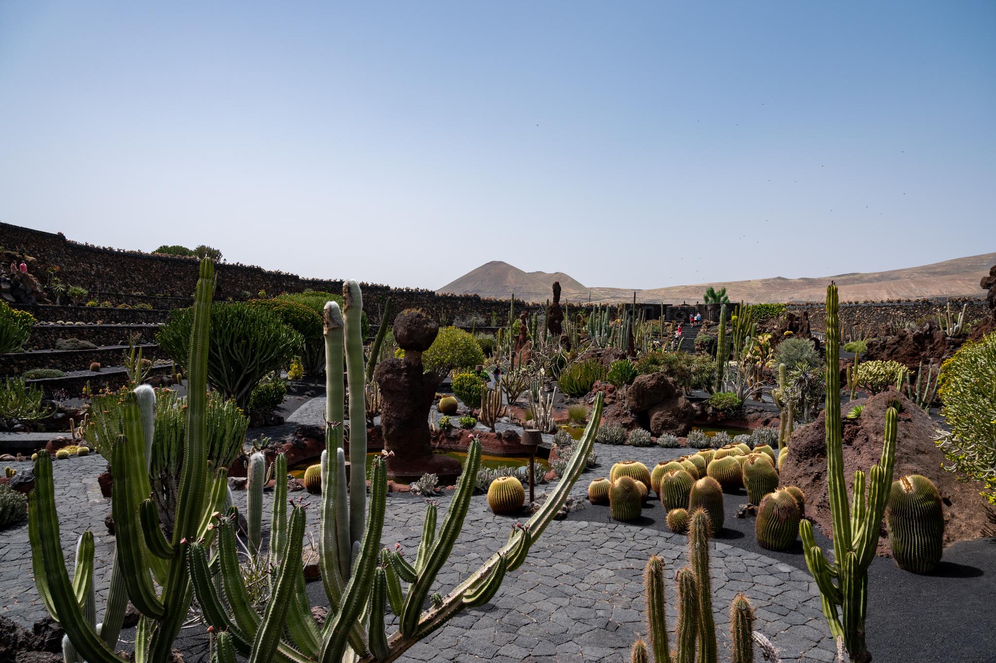 Blick über den Kaktusgarten von Manrique