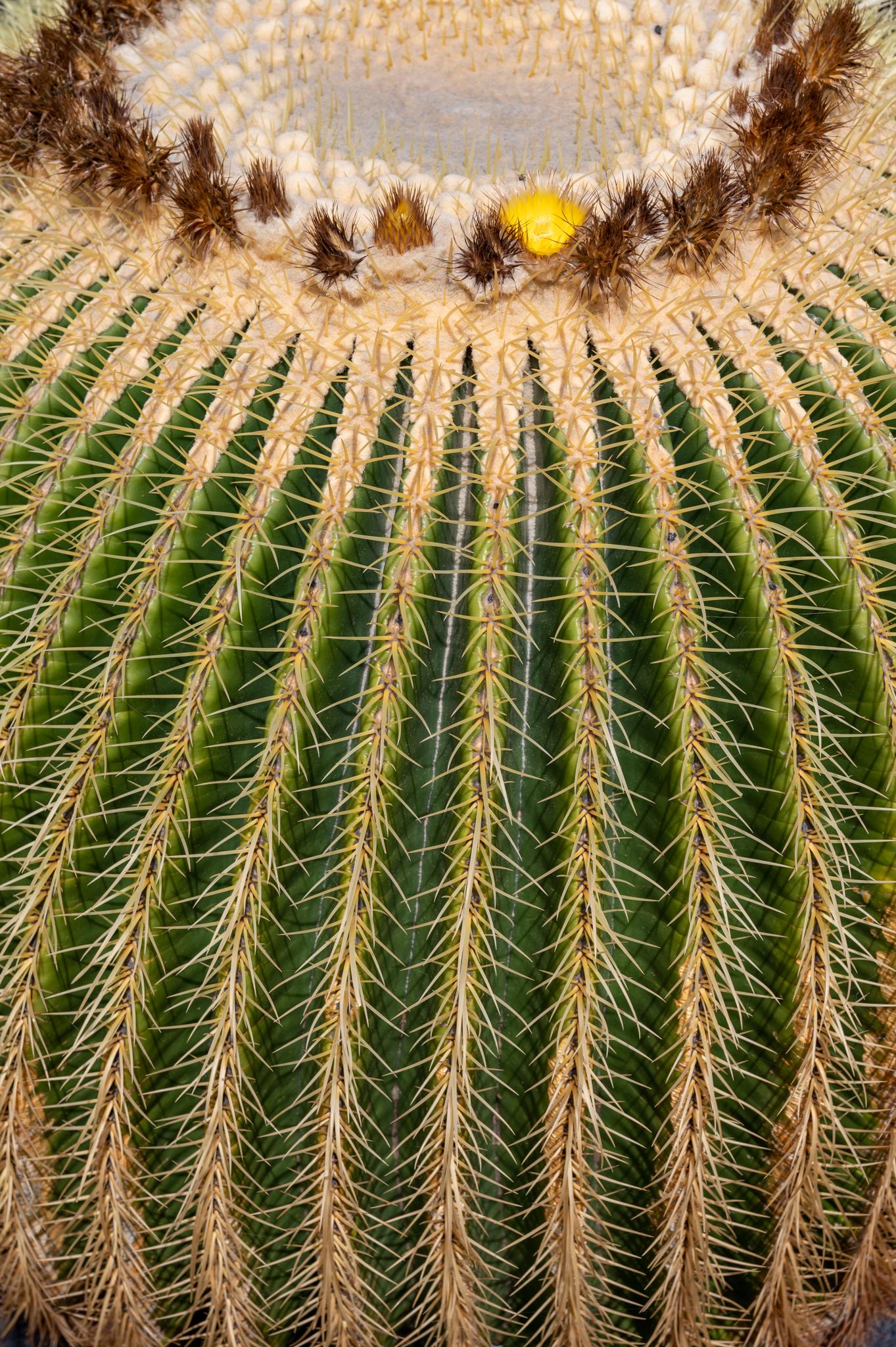 Kaktus im Kaktusgarten auf Lanzarote
