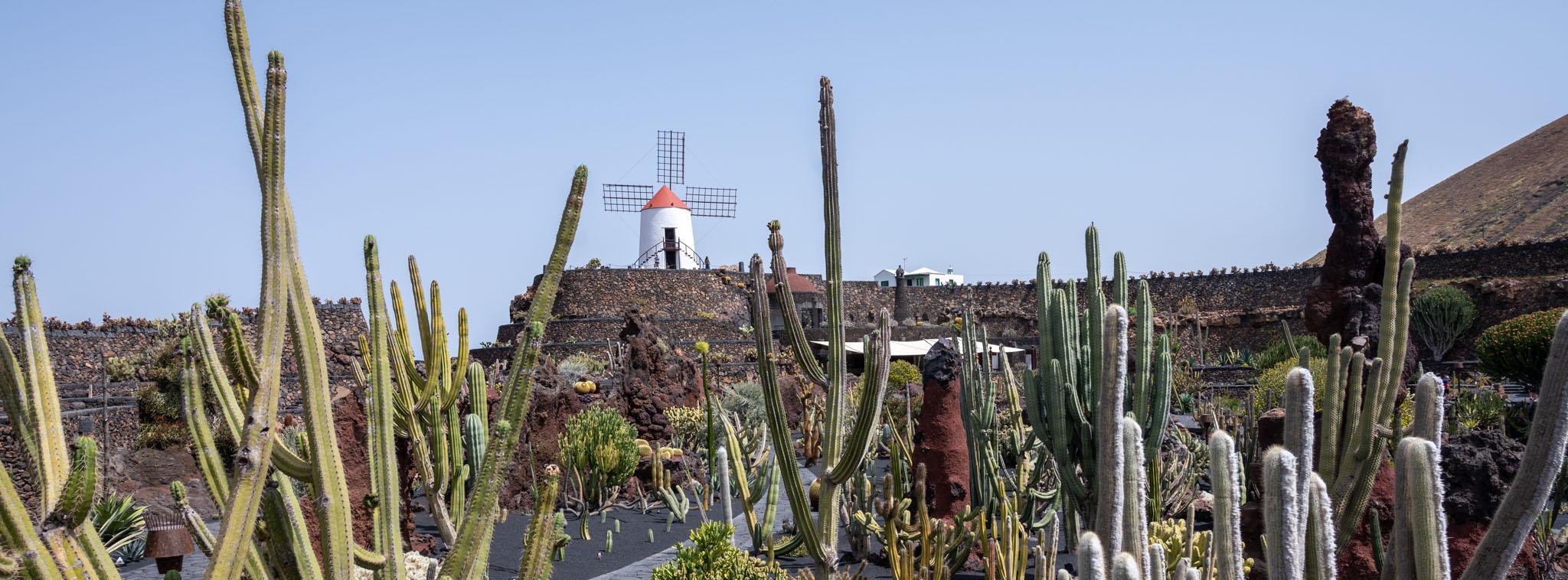 Kaktusgarten von César Manrique