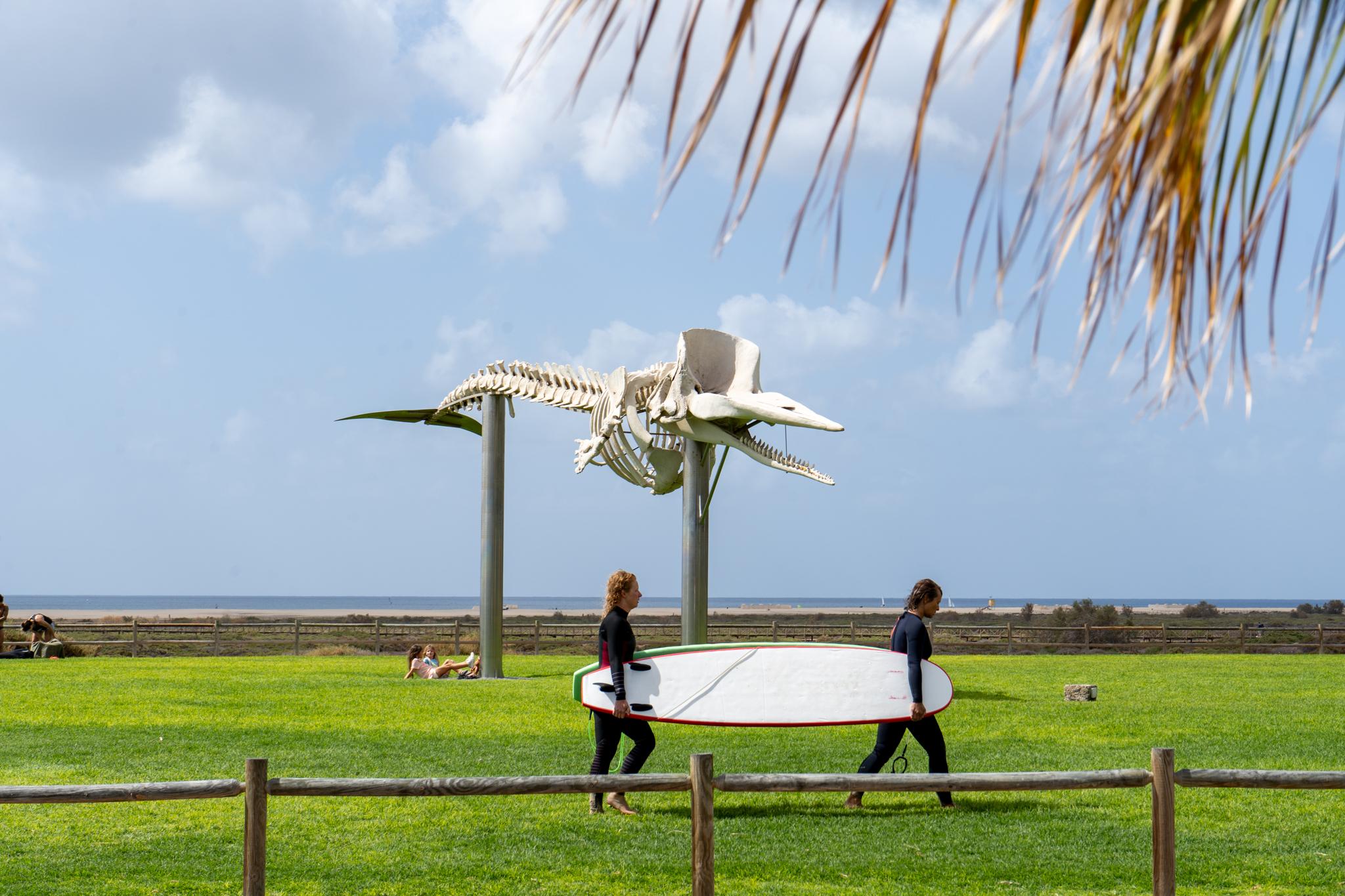 Das berühmte Walskelett am Playa de Jandia