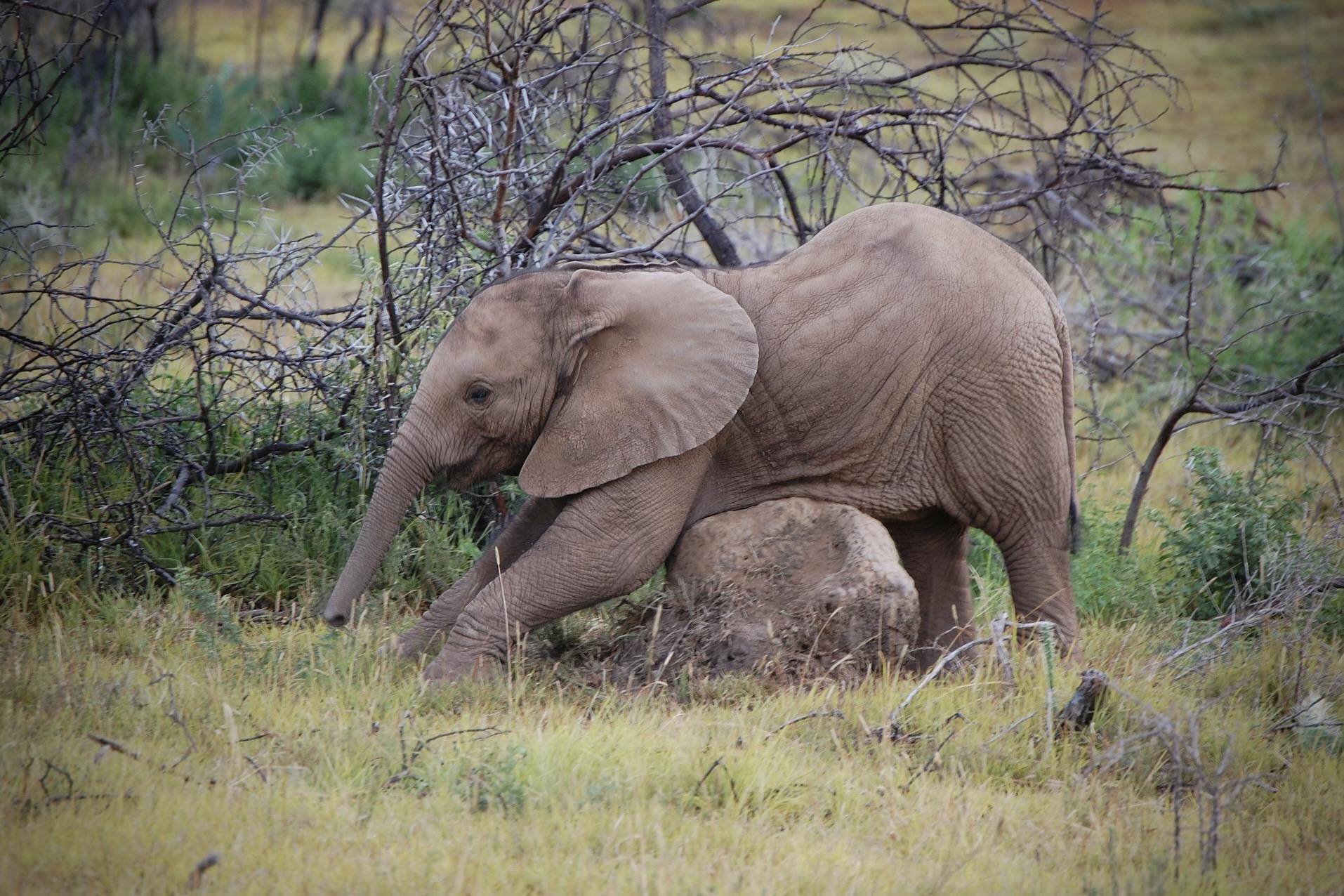 Ein Elefant bei einer Safari in Südafrika im Mai