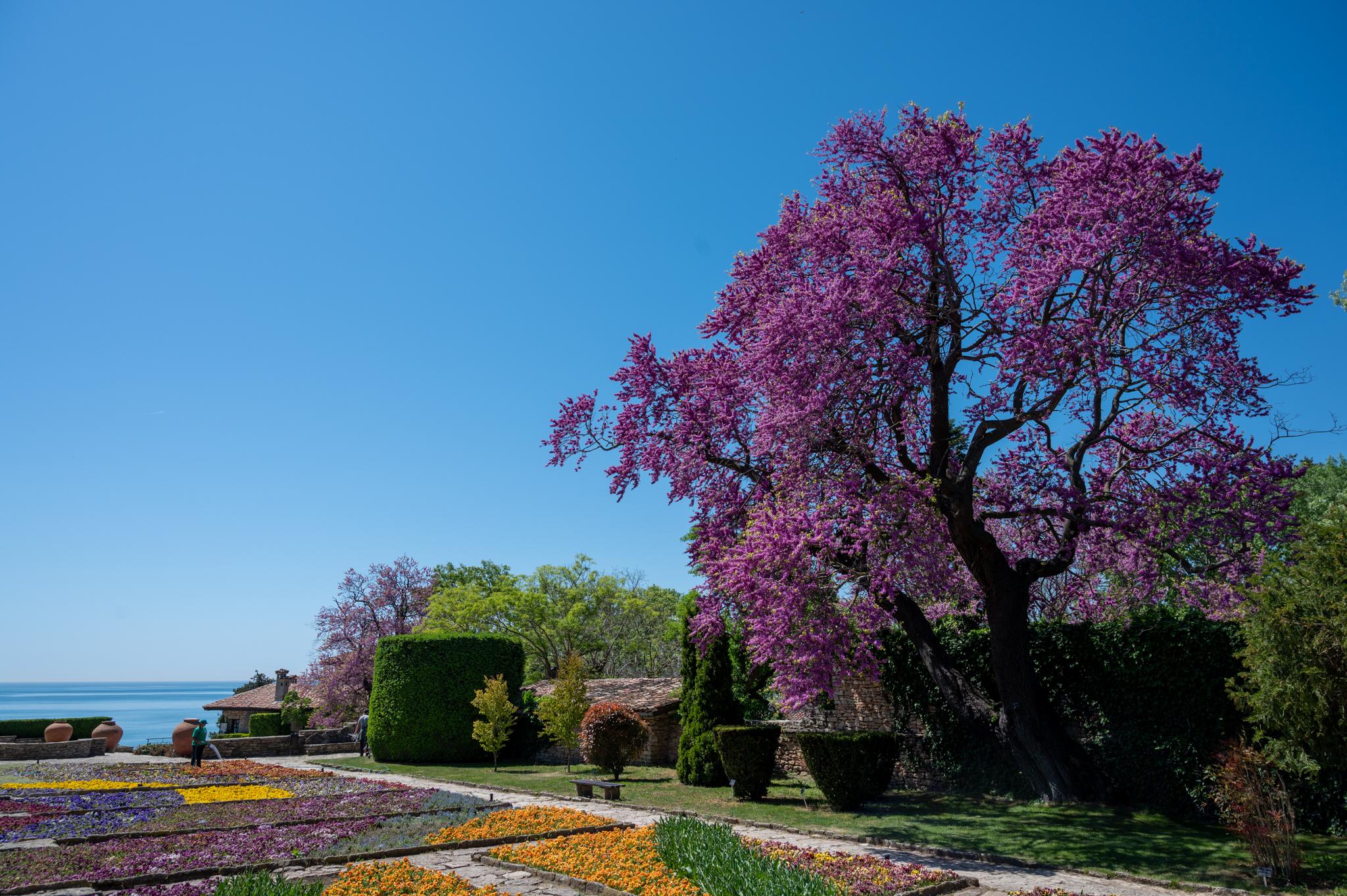 Botanischer Garten in Baltschik in Bulgarien