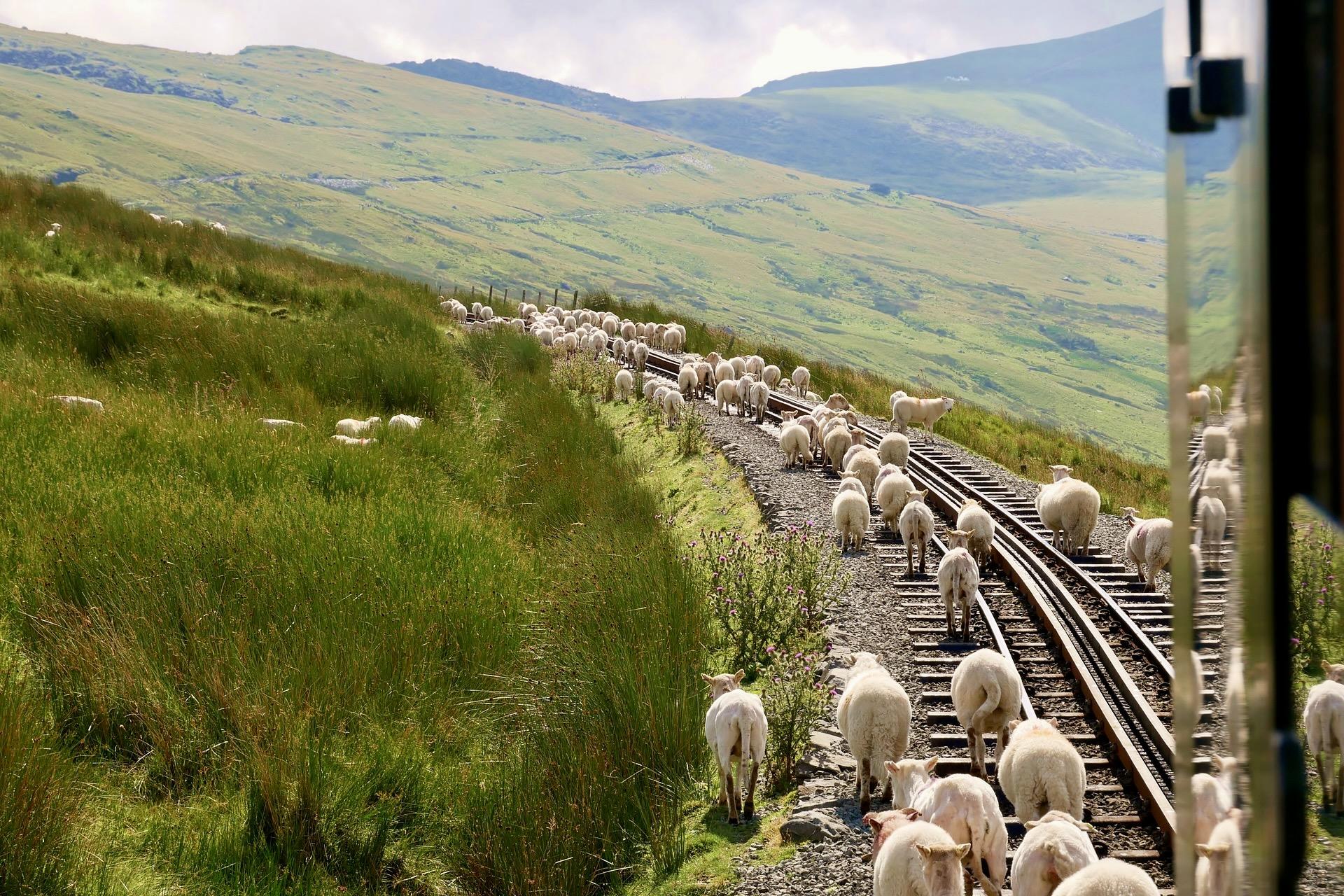 Der Talyllyn Railway gehört zu den schönsten Zugstrecken in Europa